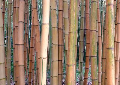 Bambou20045