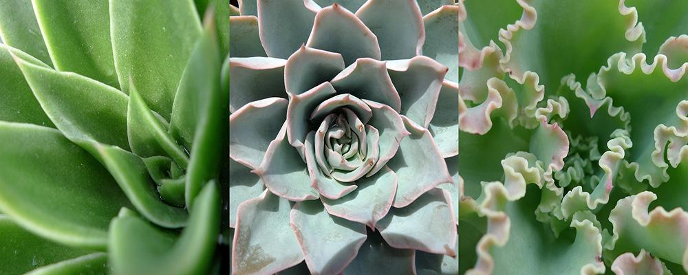 Exposition de plantes exceptionnelles