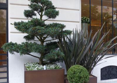 Jardin-paysagiste-composition-Terrasse-Paris-738