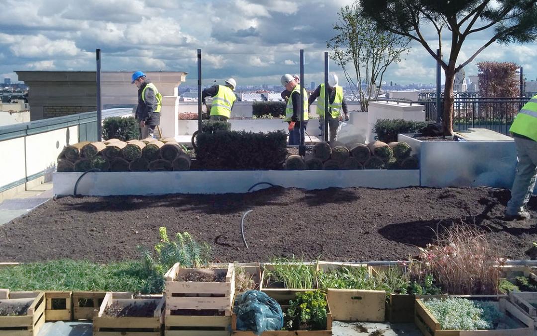 Jardin terrasse et patio en chantier à Paris