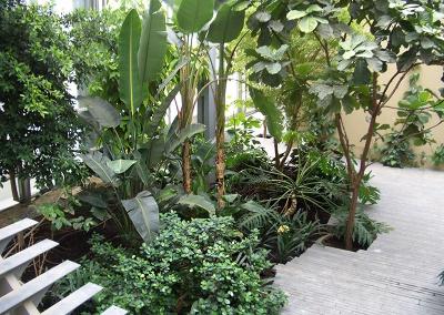 Aménagement et entretien des végétaux dans un complexe aquatique