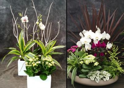 Composition florale naturelle