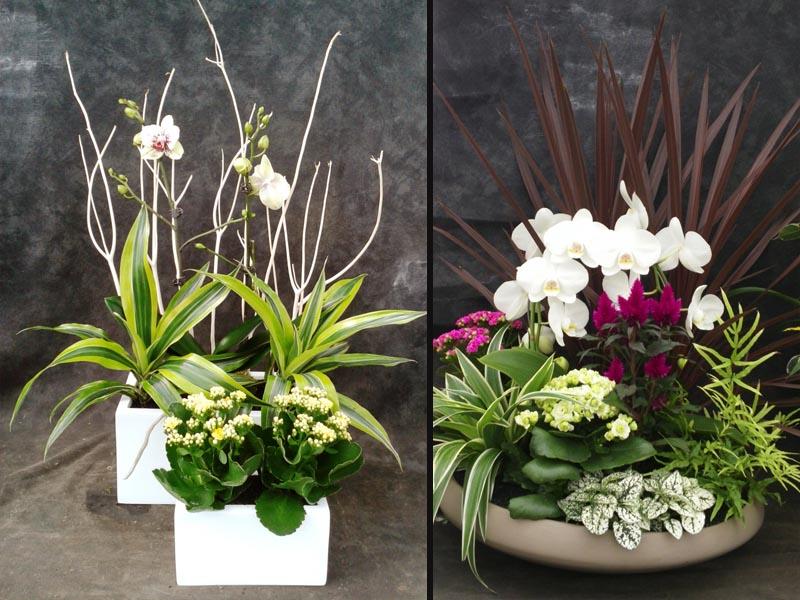 Coupes et bouquets jardins de l 39 orangerie for Composition florale