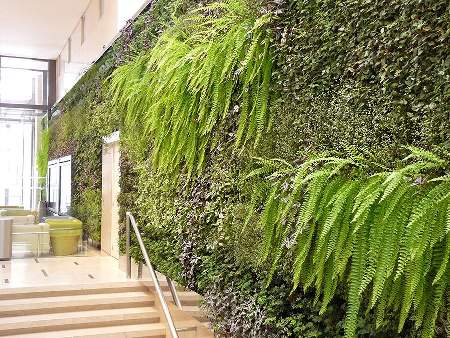 Am nagement int rieur v g tal paris 8e jardins de l 39 orangerie - Mur vegetal exterieur sans entretien ...