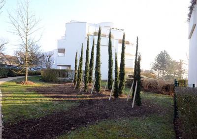 Entretien espace vert résidence Montmorency