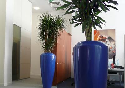 Installation et entretien de bacs plantés de végétaux