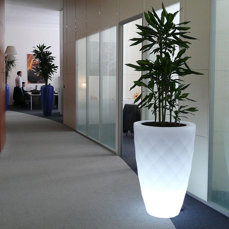 Bac de plante dans les bureaux