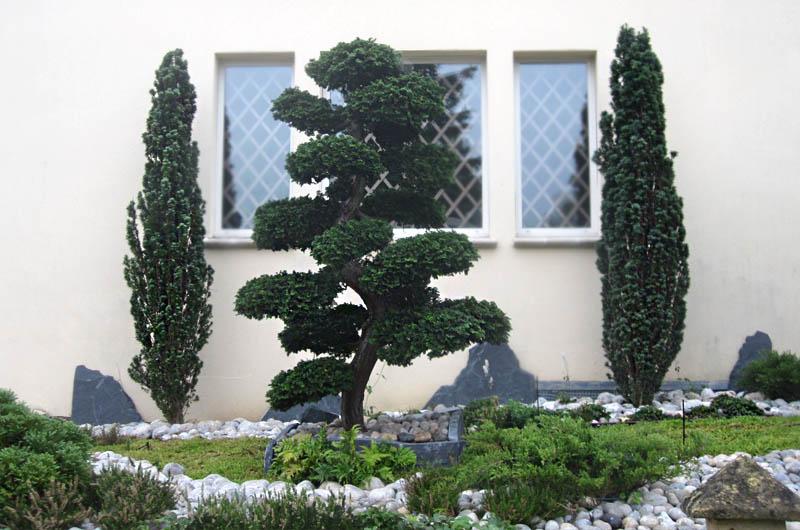 Entretien d un jardin et taille d arbres for Entretien jardin 02