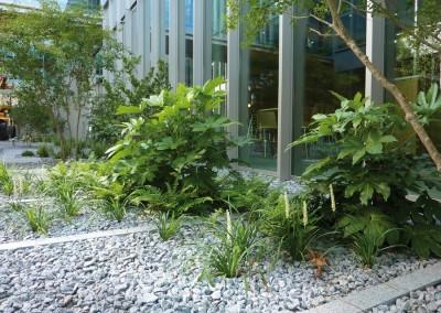 Plantation-arbre-vegetaux-05