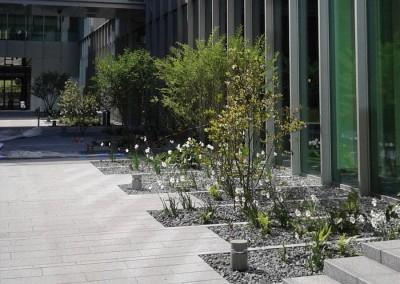Plantation-arbre-vegetaux-07