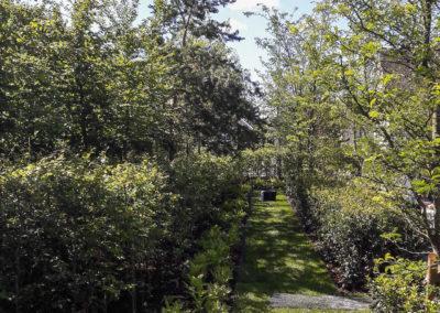 Jardin 007