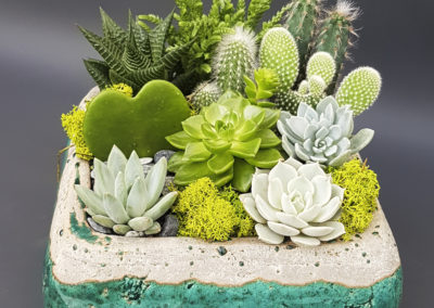 Composition succulentes Cartier