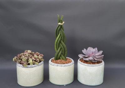 Composition succulentes Cartier