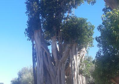 Ficus - Sujet exception unique